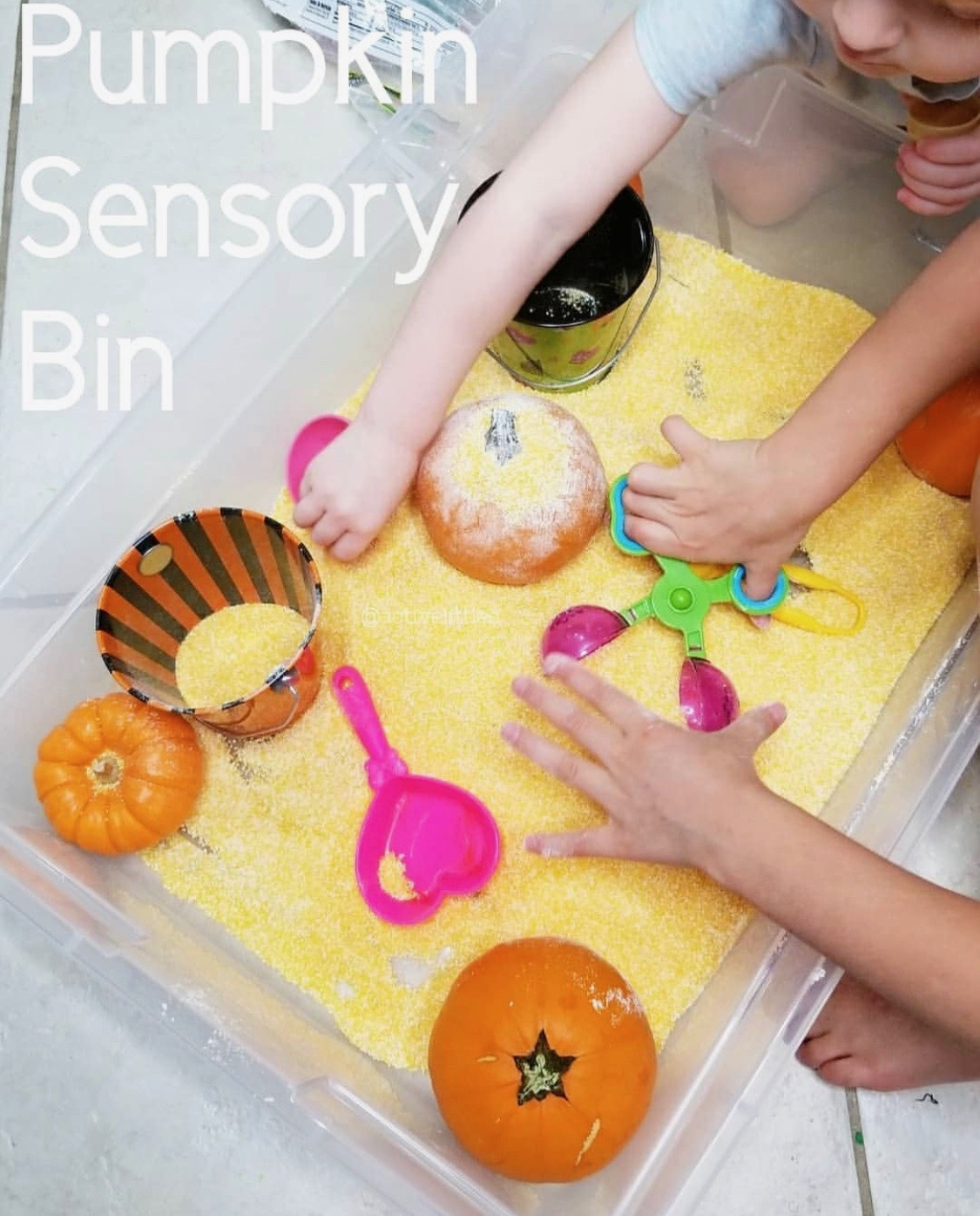 easy and simple cornmeal pumpkin sensory bin