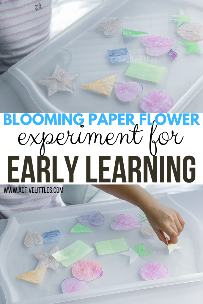 blooming flowers for early learners