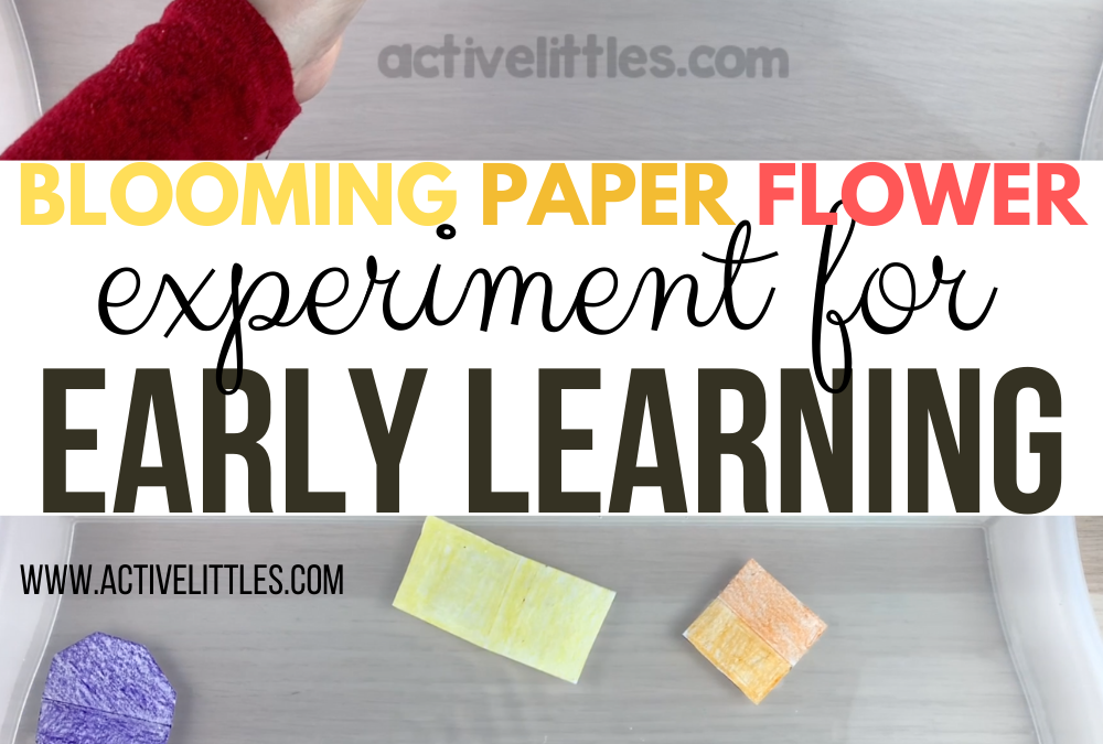 Blooming Paper Flower Experiment for Early Learning